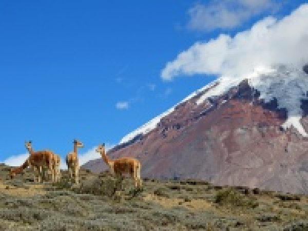 Rondreis Fascinerend Ecuador en Galapagos eilanden